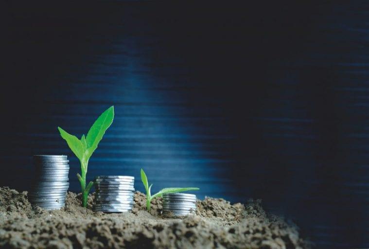 investovanie sporenie setrenie peniaze v hline kvety rastliny